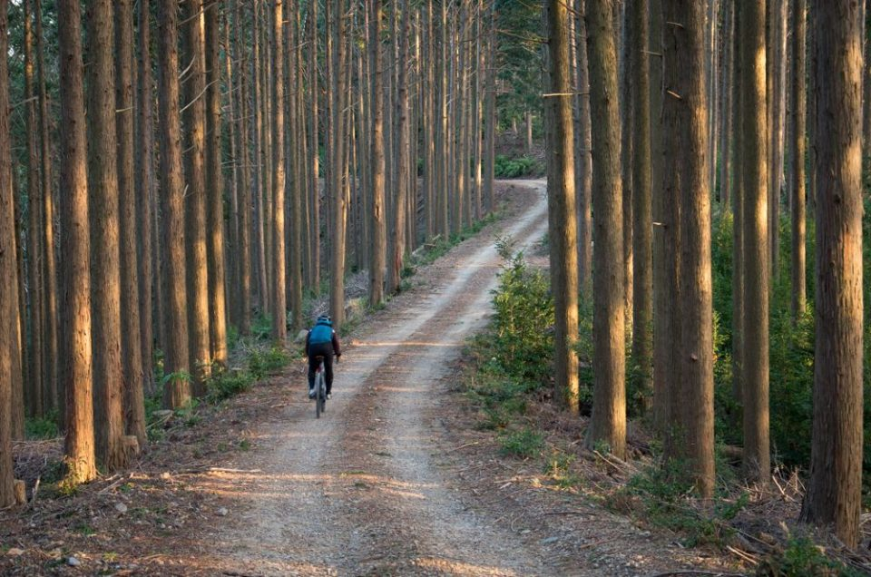 Gravel Experience Japan – お茶と古刹の遠州森ステージ
